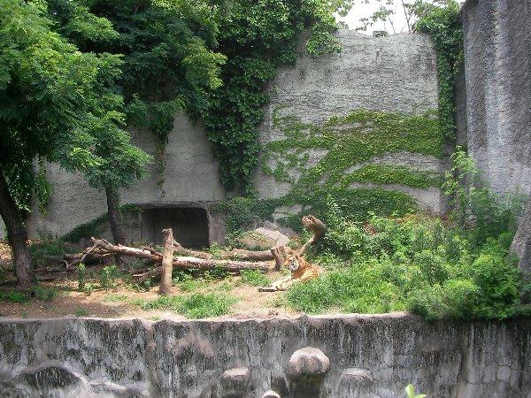 201506231146天王寺動物園⑤