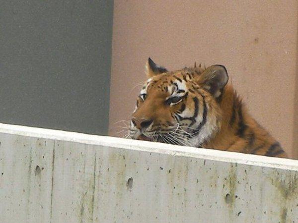 201506231133天王寺動物園⑯