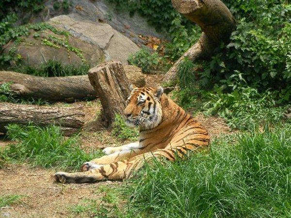 201506231146天王寺動物園⑧