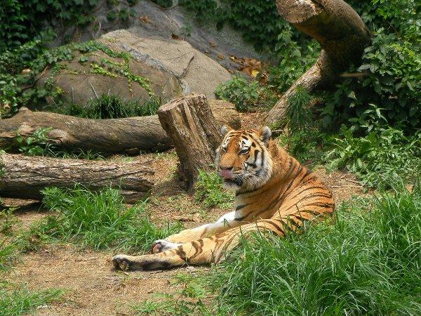 201506231146天王寺動物園⑥