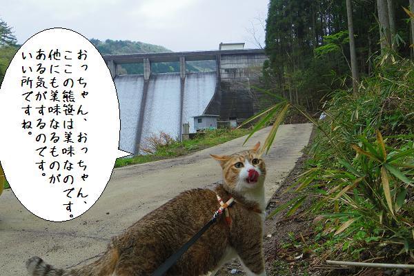 松木ダム2