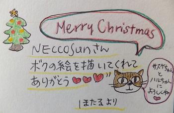 ほっちゃんからメリークリスマス