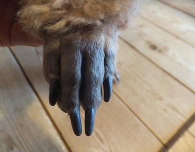 長い指(?)