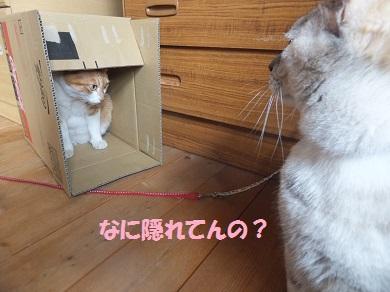 なに隠れてんの?