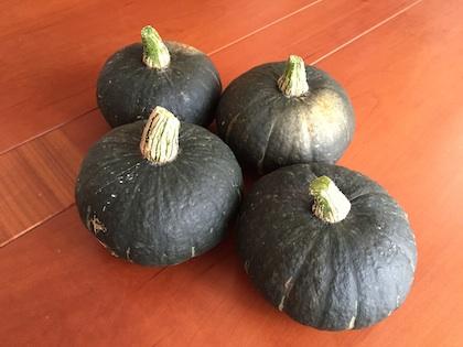 坊ちゃんかぼちゃ収穫