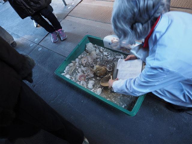貝がたくさんありました。液状化博士はリストラされ、貝殻博士(じつにかわいい)に変わっていました。