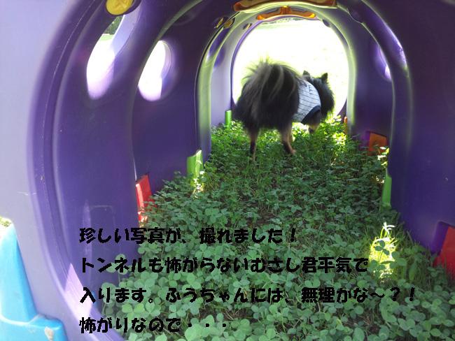 057-1689-35689-864.jpg