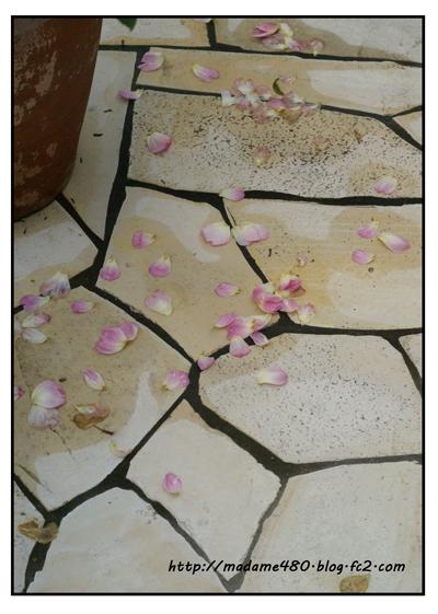 花びら散るweb用