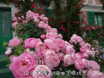 8NAJ_MnIfH1yKXG1432619402_1432619542.jpg