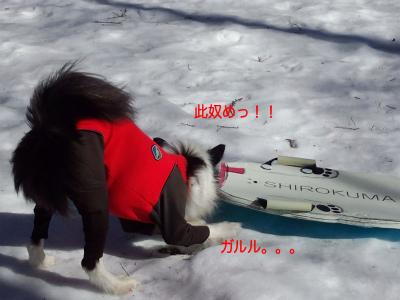 20150110karu03.jpg