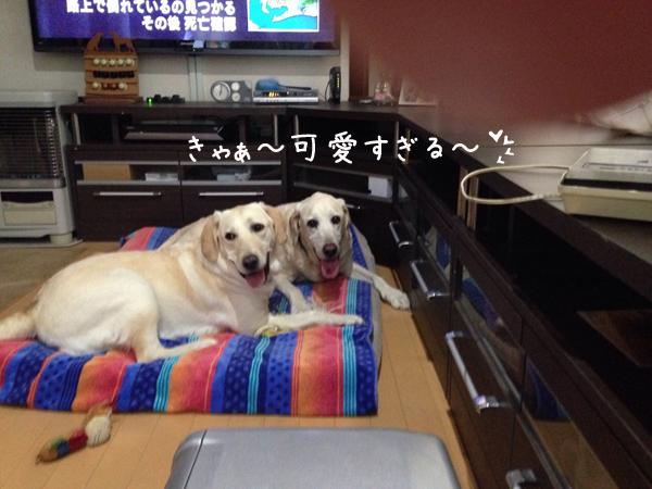 bed2_20150719202932f4e.jpg