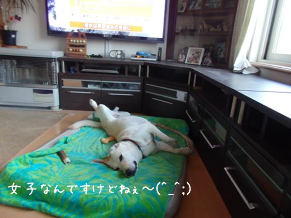 hiraki_20150708175730e47.jpg