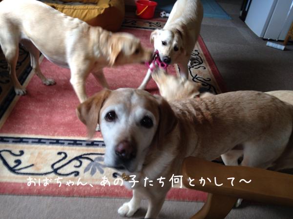 rirumeiwaku1.jpg
