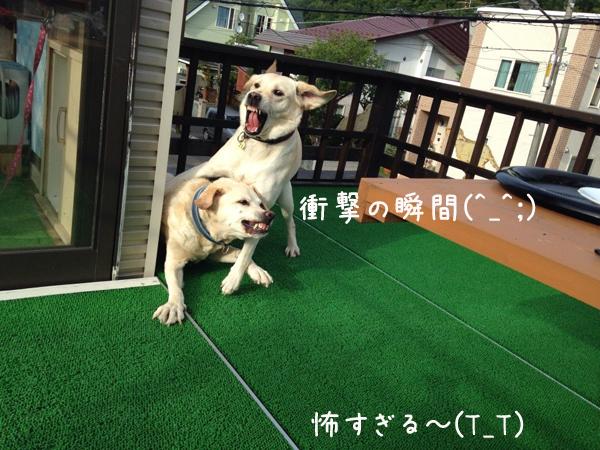 syougeki1.jpg