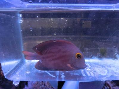 海水魚 467