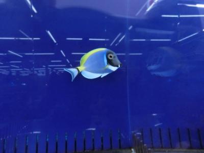 海水魚 470