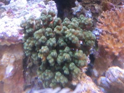 海水魚 473