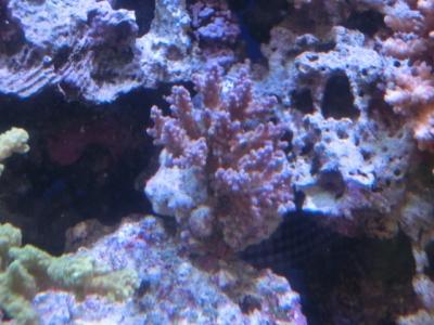 海水魚 477