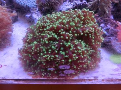 海水魚 479