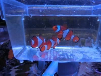 海水魚 484