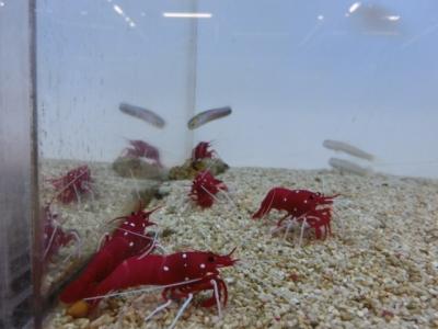 海水魚 483