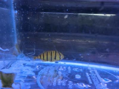 海水魚 485