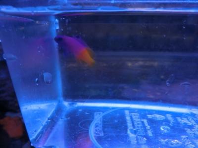 海水魚 487