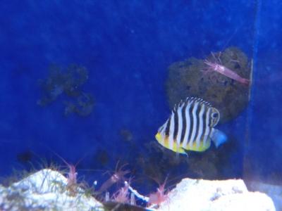 海水魚 488