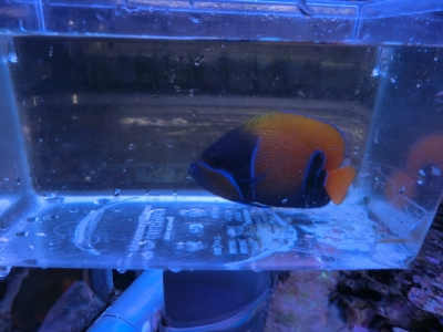海水魚 490