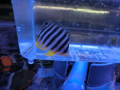 海水魚 491