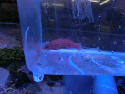 海水魚 493