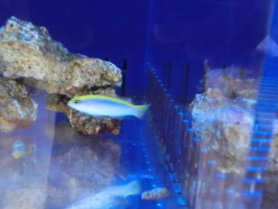海水魚 499