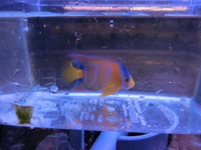 海水魚 500
