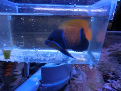海水魚 501