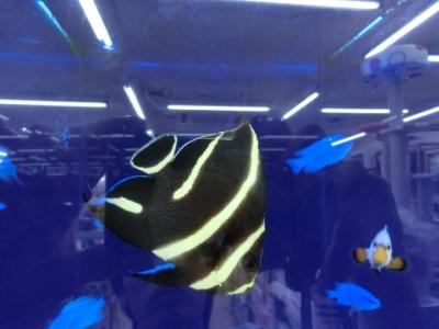海水魚 502