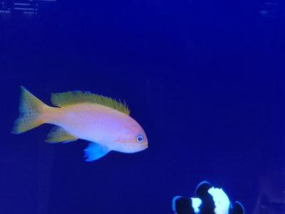 海水魚 505