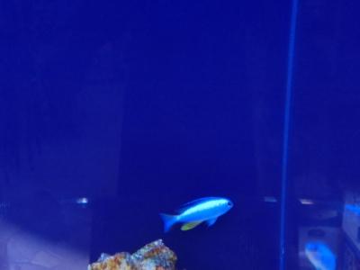 海水魚 506