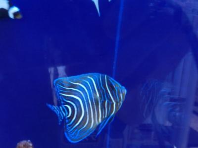 海水魚 507