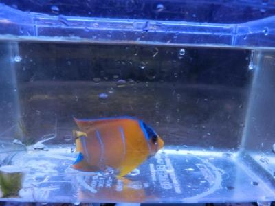 海水魚 511
