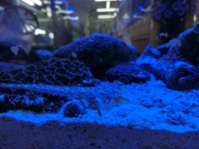 海水魚 512