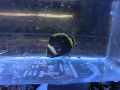 海水魚 514