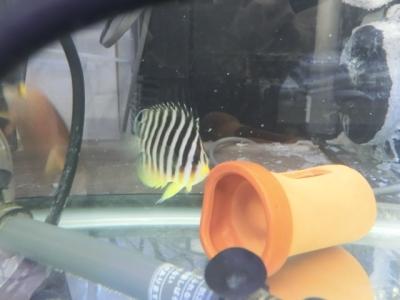 海水魚 520