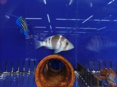 海水魚 516