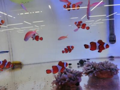 海水魚 519