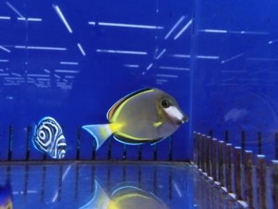 海水魚 521