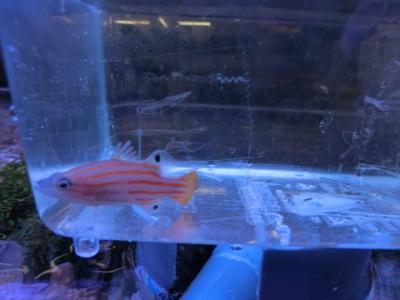 海水魚 522
