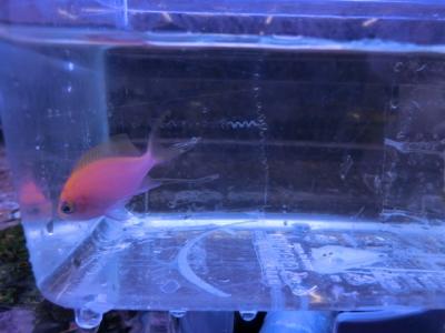海水魚 523