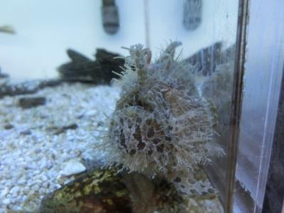 海水魚 527