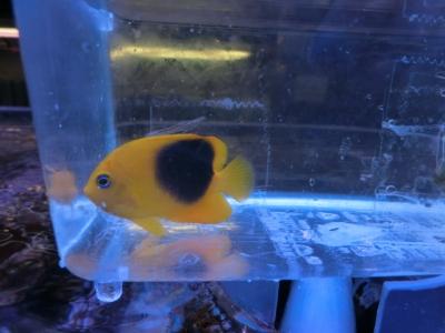 海水魚 528