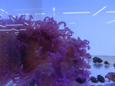 海水魚 529
